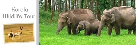 Kerala wildlife packages is boomed with exotic wildernesses | packages kerala tour | Scoop.it