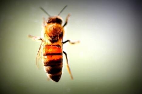 Rising CO2 levels threaten bees | Grain du Coteau : News ( corn maize ethanol DDG soybean soymeal wheat livestock beef pigs canadian dollar) | Scoop.it