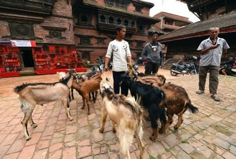 Nepal Temple Bans Animal Sacrifices as Offerings | GarryRogers NatCon News | Scoop.it