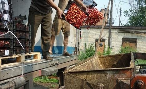 FreshFruitPortal.com | Russia destroys 7,282MT of banned food imports | Fruits & légumes à l'international | Scoop.it