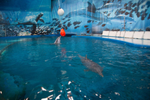 The future of the dolphins at Barcelona Zoo remains uncertain | Animal welfare | Scoop.it