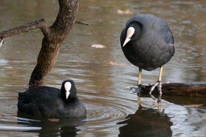 Le 12 décembre 2012 à la Réserve Ornithologique du Teich... | Le Bassin d'Arcachon | Scoop.it