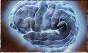 BBC - Brainsmart - Brain | Brainiacs | Scoop.it