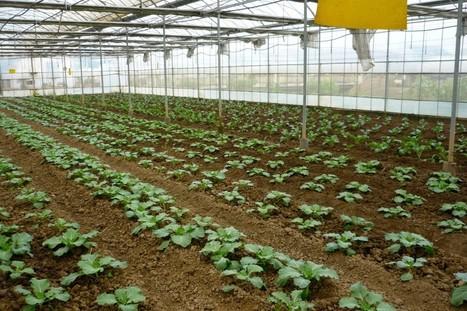 Urban Farming is Growing in Shanghai, China | City farming | Scoop.it