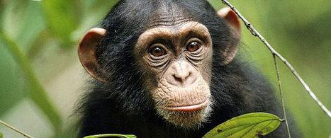 Animal Intelligence Badly Underestimated | EA7 Environmental issues | Scoop.it