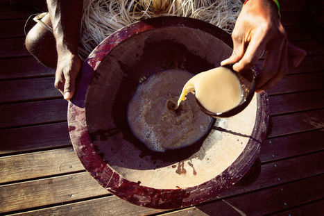 Kava and the Rise of Healthy New York - The New Yorker | Erba Volant - Applied Plant Science | Scoop.it