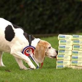 One in four dogs at Crufts is overweight, according to veterinary experts. - Haringey Independent | Muswell Hill News | Scoop.it