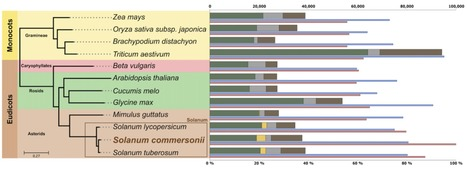 The Solanum commersonii Genome Sequence Provides Insights into Adaptation to Stress Conditions and Genome Evolution of Wild Potato Relatives | Plants&Bacteria | Scoop.it