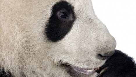 What Google's Latest Panda Update Means for Your SEO | Digital Strategies for Social Humans | Scoop.it