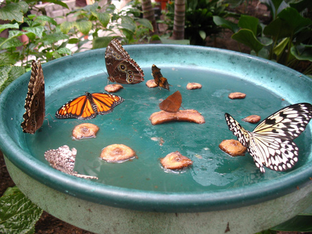 Homemade Butterfly Feeder | Share Some Love Today | Scoop.it