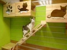 Pet Sharing: lasciare il gatto in vacanza | Gatti | Scoop.it