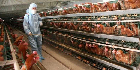 6 Crimes Against Nature in Factory Farming (Pt. 1) | Animal Abuse. | Scoop.it