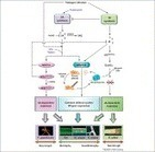 Hormone defense networking in rice: tales from a different world | Interactions | Scoop.it