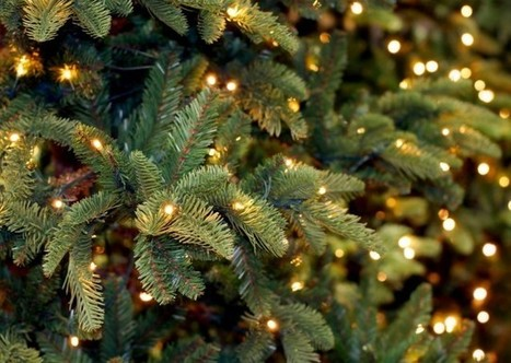 Summer Floods, Winter Heat Blamed For Christmas Tree Deaths | Sustain Our Earth | Scoop.it