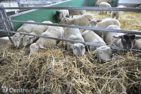 Filière ovine : un poids économique important en Nouvelle-Aquitaine - Le Populaire | Le Fil @gricole | Scoop.it