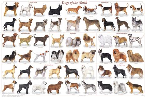 dogs_of_the_world_poster.jpg (864x576 pixels) | Cinófilia | Scoop.it