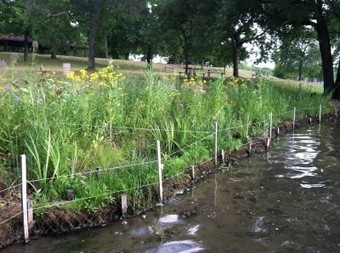 A Certified Natural Shoreline Professional can help you understand a shoreline ... - Michigan State University Extension | Hydraulics | Scoop.it