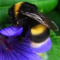 Research shows bee 'flight plans' | BBSRC News Coverage | Scoop.it