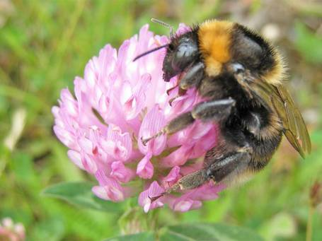 RSPB demands ban on deadly pesticides linked to bee decline | YOUR FOOD, YOUR HEALTH: Latest on BiotechFood, GMOs, Pesticides, Chemicals, CAFOs, Industrial Food | Scoop.it