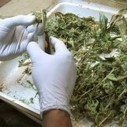 Science for stoners: Here's how pot works | The Good Stuff | Scoop.it