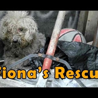 Your Morning Cry: Poodle Found Living in Trash Heap Is Now ASPCA's Dog of the Year | Compassion in Action | Scoop.it