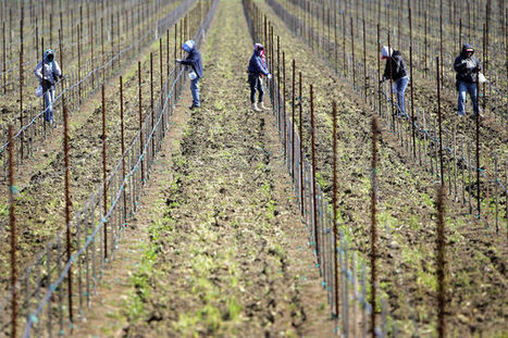 Soil dry but rainfall normal at Napa Valley vineyards - Napa Valley Register | soil vineyards | Scoop.it