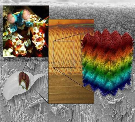 Ultra-strong 3D Printed Material Inspired by Natural Herringbone Pattern on Mantis Shrimp | Biomimicry | Scoop.it