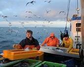 Salt Stratification Determines the Fate of Fish Stocks in the Baltic Sea | Sustain Our Earth | Scoop.it