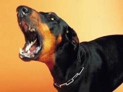 Dog bites drive up insurance payouts; premiums could be next   Gentle Dog Training and Care   Scoop.it