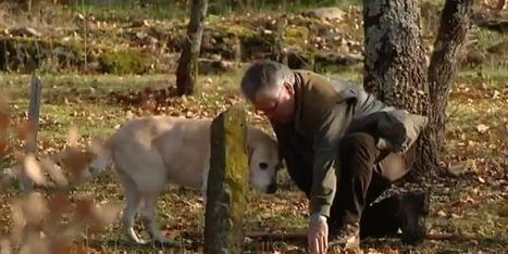 En Nord-Isère, les chercheurs de truffes déplorent une saison catastrophique - France 3 Alpes | Truffes L&Co | Scoop.it