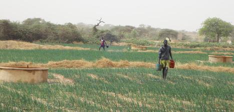 Un futur plus vert pour le Sahel : lutter contre la désertification au Sénégal | Enseigner l'Histoire-Géographie | Scoop.it