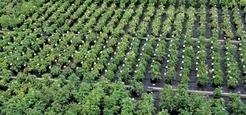 Europe : les multinationales vont-elles prendre le contrôle des plantes ? | Questions de développement ... | Scoop.it