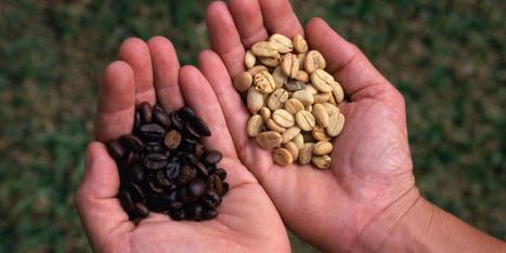 Women in Coffee   Coffee News   Scoop.it