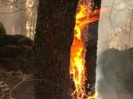Los incendios en los bosques españoles han evolucionado con el clima desde 1968 | Ordenación del Territorio | Scoop.it
