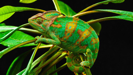'Chameleon' crystals could camouflage clothing and cars | Amazing Science | Scoop.it
