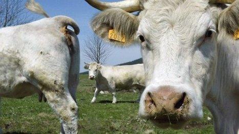 Agriculture : pourquoi des centaines d'exploitations en difficulté sont-elles privées d'aides européennes ? - France 3 Bourgogne | Le Fil @gricole | Scoop.it