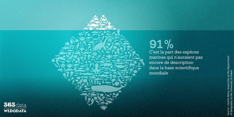365data.fr | Cabinet de curiosités numériques | Scoop.it