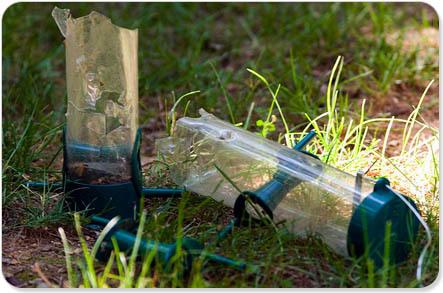 shelterrific » Blog Archive » post off: what pests battle for your garden?   Garden Designer   Scoop.it