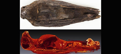 3D imaging helps understand the role of birds in ancient Egypt | Archaeology News | Scoop.it