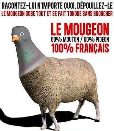 Les Pigeons, ou l'Avénement Pathétique du Militantisme Libéral #geonpi | Le ras le bol des entrepreneurs Français d'être pris pour des pigeons | Scoop.it