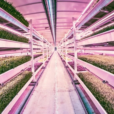 UK - Small-scale commercial aquaponics - WWII bomb shelter becomes hi-tech salad farm deep under London   Aquaponics in Action   Scoop.it