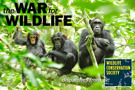 Using SMART Technology to Stop Wildlife Poachers   Wildlife Trafficking: Who Does it? Allows it?   Scoop.it