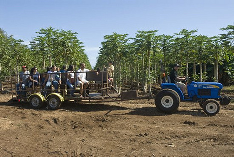 Kahuku Farms now offering public tours of diversified ag | Hawaii vacations | Scoop.it