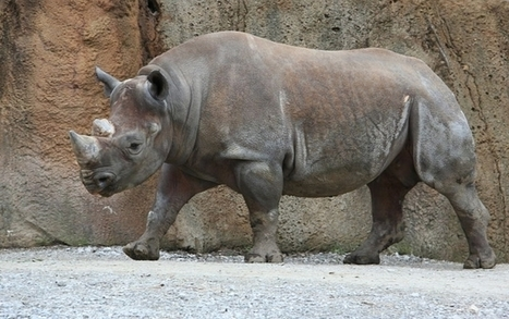 Extinction Of Large Herbivores Could Lead To 'Empty Landscapes' | Human-Wildlife Conflict: Who Has the Right of Way? | Scoop.it