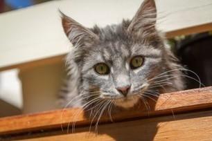Come educare un gatto: ecco le 5 regole fondamentali | AmicoMaineCoon.it | Scoop.it