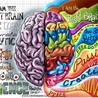 What we are learning about the brain
