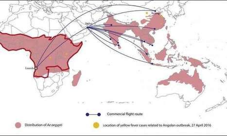 Yellow fever epidemic threatens to spread from Angola to China | Sustain Our Earth | Scoop.it