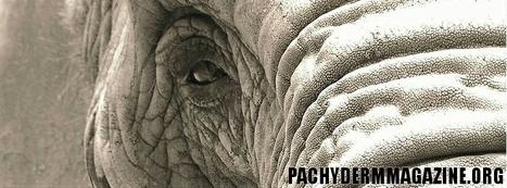 Warlord Kony killing Congo elephants, selling ivory in Sudan | Conservation | Scoop.it