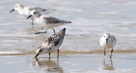 Les 16 et 17 janvier, participez au comptage des oiseaux d'eau - Actualités - LPO | environnement et santé | Scoop.it