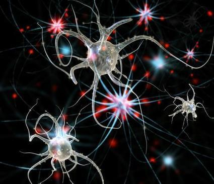 Anti-Inflammatory Drug Reduces Parkinson's Neuronal Loss, Motor Deficits In ... - Medical Daily | Medical Tourism saves lives in the USA and worldwide. Experimental drugs saves lives. | Scoop.it
